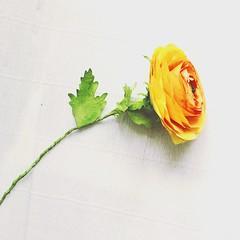 Ranunculus (vihrarowe) Tags: ranunculus paper flower flowers buttercup diy create bookmark yellow handmade
