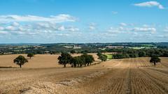 Straw lines.... (AJFpicturestore) Tags: shropshire shropshirevillages strawlines crop farmland anseladams vladimirdavidovichashkenazy radio3 alanfoster