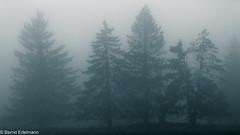 Nebel in der Hochrhn (Bernd Edelmann) Tags: rhn hochrhn thringen bayern hessen
