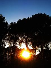 (En)clave de sol (Mar Goizueta) Tags: cadalsodelosvidrios luz contraluz sol puestadesol bosque pinos pinar atardecer sunset sun light forest tree rbol rboles