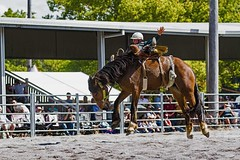 Slipping Off (Sterling67) Tags: stroud rodeo 2016 cowboy cowgirl dirt dust horse bull challenge courage outdoor
