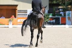 IMG_7639 (dreiwn) Tags: dressage dressur dressuur pferd reitturnier turnierreiten pferdesport horse horseback horseriding equestrian reitverein dressurprfung kandare doublebridle reiten pferde reitplatz ridingarena