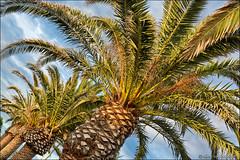 palau (heavenuphere) Tags: palau sassari gallura puntosardegna sardegna sardinia sardinie italia italy europe island seaside resort palm tree 24105mm