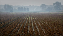 Morning Mist (Eric@focus) Tags: greatphotographers mist morning belgium damme agriculture