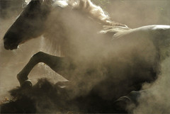 heat, dust and Jasminero (me*voil - on and off) Tags: jasminero horse stallion andalusian action dust sand silhouette