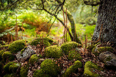 Madre Tierra - Galicia (milenamphoto) Tags: galicia nature landscape different forest deep green tree branch moss spain ourense paisaje