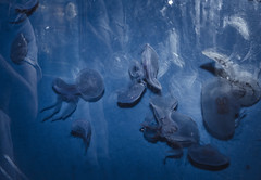 Life is like jellyfish - sometimes you get stung. (emmavanlooy) Tags: jellyfish jelly fish sea creature processing blue water ocean landscape low aperture
