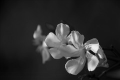 shelter (aniawagner) Tags: blackandwhite whiteandblack blackandwhiteonly monochrome flowers nature softness nikon calmness silence tranquility peaceful smoothness rest