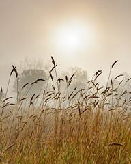 _DSC7480Aurora-HDR (john4jack) Tags: fog shootingstar