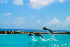 Curaao Sea Aquarium (Enrique.Kirchman) Tags: dolphins delfines sea aquarium acuario curaao isla summer verano oceano ocean mar cruise crucero