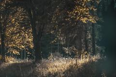 Hidden Treasure (Carina Aurora in Wonderland) Tags: outdoor woods forest light lightning vsco wanderlust travel explore exploring hiking nature tree trees plants mextures sombre melancholia melancholic moody mood alone silence silent wilderness wild girl backpack