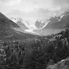 Val Morteratsch (zanettifoto) Tags: graubnden pontresina schnee ilfordxp2super morteratsch abend herbst schweiz wolkenhimmel sonnenuntergang schwarzweissfotografie berg gletscher wald moraene stein