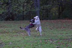 Dog Dance 03.11.2012