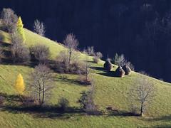 Radiša Živković - Hill II (Radisa Zivkovic) Tags: autumn trees light sunset sunlight mountain nature yellow forest landscape nikon scenery europe shadows hill serbia haystack birch hay d200 hillside srbija golija