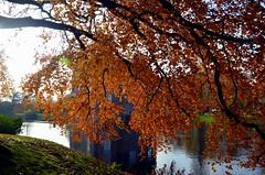 Heerde Castle Landed Vosbergen (JaapCom) Tags: autumn trees holland castle water landscape herfst boom blad bos landed veluwe kasteel vosbergen gelderland landgoed heerde