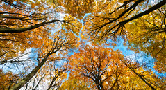 Painting Nature (Lucky Lucas) Tags: blue trees sky color art fall nature up leaves forest painting photography branches naturephotography kleur d300 1024mm muhldeponie