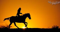 سيلويت: الخيل وخيالها 1175 (momazo) Tags: sunset horse sun silhouette night mare run knight شمس خيال غروب فارس faras حصان خيل فرس اسطبل خيالة سيلويت