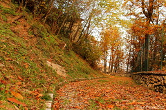 Blanket of Leaves (Ilù_Pank) Tags: autumn mountain tree fall leaves alberi landscape path hill trail blanket sentiero albero montagna collina