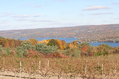 Keuka Lake (eyriel) Tags: blue autumn sky lake fall nature water vineyard vines vine winery grapes hillside fingerlakes grape