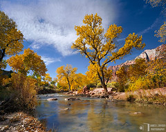 Golden Cottonwoods, Virgin River (James L. Snyder) Tags: park morning pink november autumn trees red orange usa mountains southwest fall beach water leaves yellow rock horizontal clouds river gold golden utah nationalpark sand sandstone rocks butte glow slow natural native sandy smooth peaceful sunny bluesky 2006 calm canyon foliage formation shore highdesert riverbed cottonwood glowing zion serene shallow zionnationalpark deciduous dreamlike riverbank monolith graceful sedimentary tranquil radiant enchanted gleaming northfork cirrus riparian virginriver splendor otherworldly beckoning meandering zioncanyon coloradoplateau washingtoncounty fremontcottonwood populusfremontii pointpetty