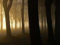 Lost in fog (RainerSchuetz) Tags: november trees mist fog photomix thesecretlifeoftrees besteverdigitalphotography