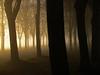 Lost in fog (RainerSchuetz) Tags: november trees mist fog photomix thesecretlifeoftrees besteverdigitalphotography