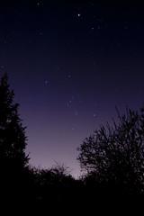 orion (The steelyglint) Tags: nikon nightshot orion betelgeuse rigel jupiter constellation aldebaran saiph nikond40 Astrometrydotnet:status=solved Astrometrydotnet:version=14400 Astrometrydotnet:id=alpha20130284746329