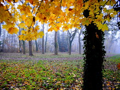 Autumn colors (mujepa) Tags: autumn trees mist france fall colors yellow automne arbres lorraine metz feuilles mygearandme