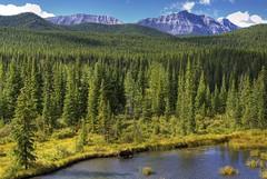 Natural Habitat (dbushue) Tags: trees mountains nature nikon stream wildlife moose albertacanada 2012 bullmoose naturalhabitat coth supershot kananskiscountry absolutelystunningscapes d7000 damniwishidtakenthat coth5 dailynaturetnc12 sunrays5