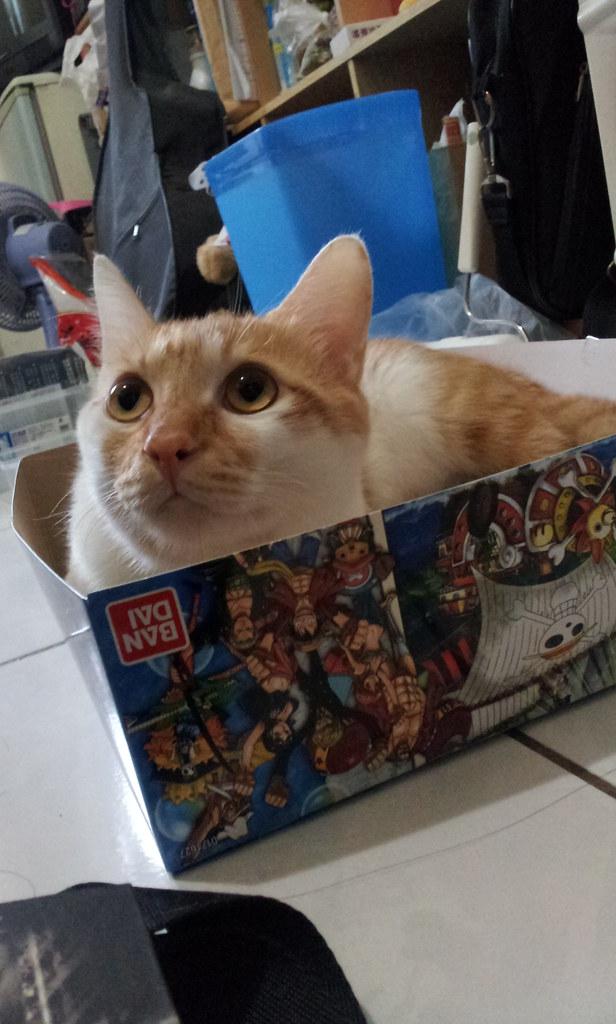 貓兒子不認我...但他還是很可愛(拭淚