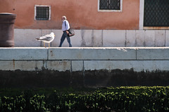 Seagull ({lor}) Tags: street venice canvas thehumanfactor poetryoflife thesuchnessoflife
