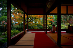 momiji '12 - autumn leaves #8 (Housen-in temple, Kyoto)