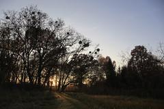 Hoppenrade 2012 | filmmann.de 10 (foto4berlin.de) Tags: park autumn fall germany deutschland herbst natur brandenburg fontane foto4berlinde filmmannde lwenberg hoppenrade lwenbergerland