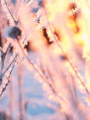 rise and shine (__o__) Tags: winter snow sunrise freeze neve galaverna sooc