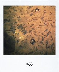 "#DailyPolaroid of 27-11-12 #60 • <a style=""font-size:0.8em;"" href=""http://www.flickr.com/photos/47939785@N05/8256480643/"" target=""_blank"">View on Flickr</a>"