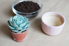 DIY SUCCULENT GIFT 1 by apairandaspare, on Flickr