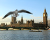 Surprise seagull in Westminster! (Tara.Quinn) Tags: uk travel england london big ben unitedkingdom seagull bigben tourist westminister yahoo:yourpictures=yourbestphotoof2012