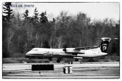 LIFTOFF FROM KBLI... (AvgeekJoe) Tags: dhc8402 q400 horizonair alaskaairlines kbli bellinghaminternationalairport bellinghamwashington bellinghaminternational bombardierdhc8402dash8 bombardierdhc8402 dash8 propliner propliners turboprop airplane aviation plane n422qx blackwhite blackandwhite bw propblur dash8400 dehavillandaircraftofcanada dehavillandaircraftofcanadadash8400