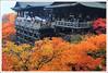 20121126_6872a_京都之秋 (Redhat/小紅帽) Tags: autumn fall japan maple kyoto redhat 京都 日本 紅葉 秋 清水寺 楓葉 あき 秋天 楓紅 もみじ 小紅帽 秋雨 きよみすでら