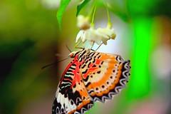Colours (Rajavelu1) Tags: butterfly garden airport singapore canon60d art artland creative colours internationalphotographer flowers travel toor
