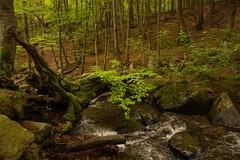 Creek (gennadiy.troitskiy) Tags:    bg