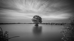 Last one standing (tapanuth) Tags: mangrove tree water pond sky cloud longexposure plant bush forest landscape cultivated scene solitude emotion blackandwhite bw horizontal clean sparse nature view geology geography sunset light monochrome monotone fineart movement