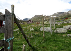 Norwegian Fence (pienw) Tags: fence hff sanddalen farm mountain vang valdres oppland jotunheimen sandalstlen