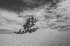 Dunes Beach (Underground Joan Photography) Tags: sandbanks sandbanksprovincialpark dunesbeach ontario travelon beach blackandwhite monochrome landscape princeedwardcounty