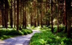 Il sentiero 105 ... (Augusta Onida) Tags: albero tree valvisvende italia bosco wood strada street passeggiare walk veneto