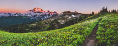 Bloom (charleswang55) Tags: photography nikon mountains mountain mount baker grass flowers hiking outdoors landscape nature wanderlust reiproject1440 pnw pacific northwest washington sunset panorama snow summer sky light day trees explore camping