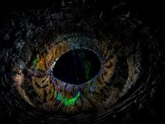 P9141480 (Jeannot Kuenzel) Tags: jeannotkuenzel jeannot kuenzel wwwjk4unet jk4u malta scuba under water underwater diving photography macro supermacro olympus epl5 zen port leica dg macroelmarit 45mm f28 asph ois inon z240 240z ucl165 s2000 moods aliensofthesea aliensofthedeepblue alien deep blue mediterranean sea maltaunderwater maltaunderwatermacro maltaunderwaterphotography bestmaltaunderwaterpictures maltamacro underwaterphotography maltascubadiving supermacrophotography underwatersupermacro underwateralien underwaterworld underwatercreature underwatermacro extrememacro superextrememacro