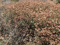 Alta Vicente (William Cullen) Tags: williamcullen palosverdespeninsulalandconservancy altavicentenaturereserve ranchopalosverdes