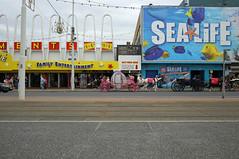 Sealife (lynnmariehall) Tags: seafront seaside blackpool canoneos6d sealife pony amusements arcade tramlines