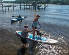 Gabby getting balance (crisp4dogs) Tags: gabby pwd portuguesewaterdog puppy water paddleboard intercoastal waterway crisp4dogs alice beth lizzy